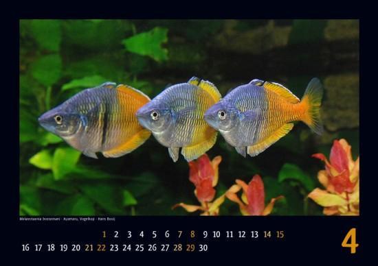 irg-kalender2012_04_klein