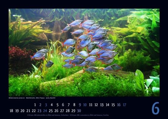irg-kalender2012_06_klein