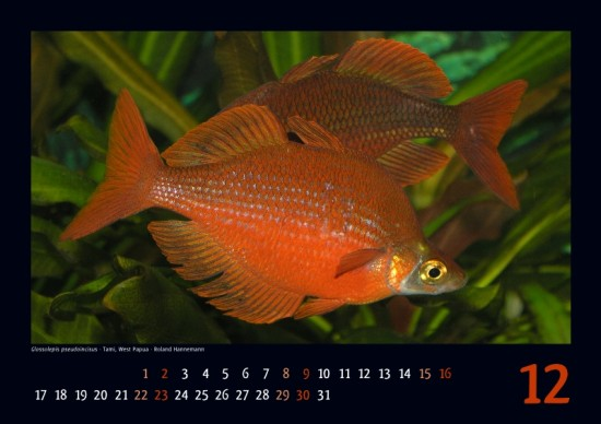 irg-kalender2012_12_klein