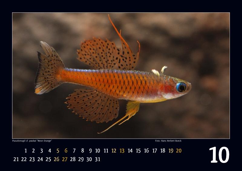 IRG-Kalender2013_10